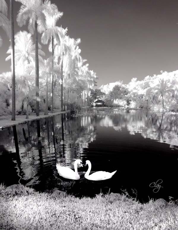 infrared photography art